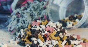 Boites ou croquettes pour chiens