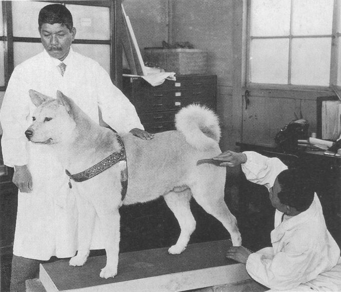 Hachi-Ko chien fidèle Japon