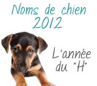 """Les noms de chien 2012 : l'année du """"H"""""""
