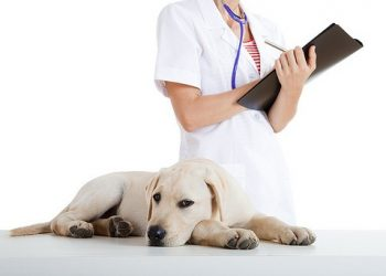 Une castration chimique pour les chiens ?