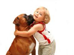 76 colliers antiparasitaires retirés du marché pour une potentielle dangerosité sur les jeunes enfants