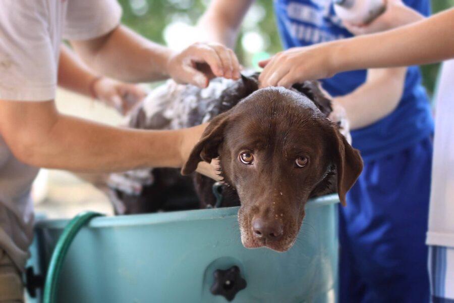 Laver son chien conseils