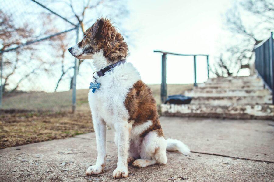 Apprendre ordre assis chien