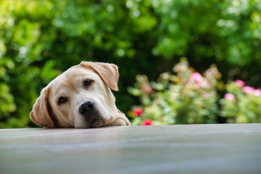 Divorce séparation et chien