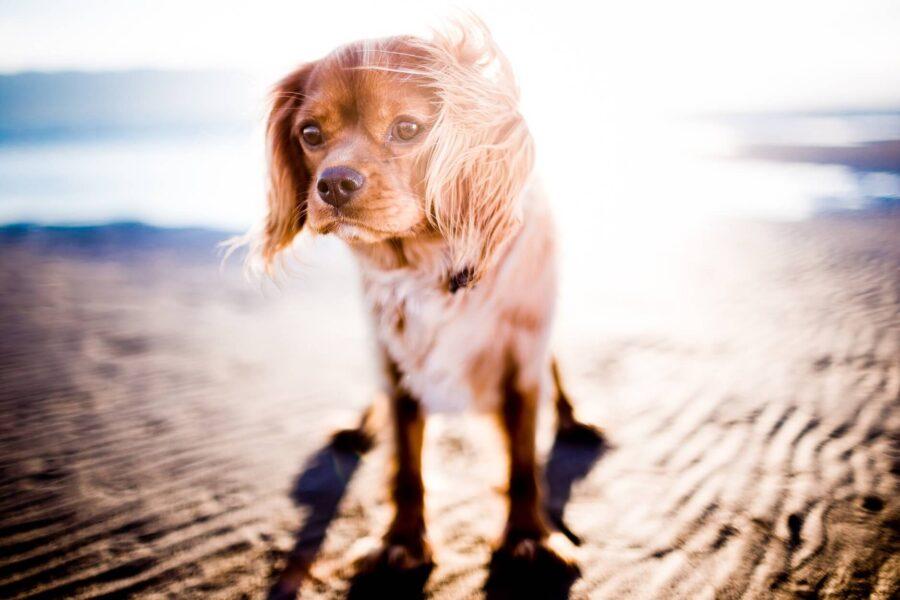 Idées reçues chiens