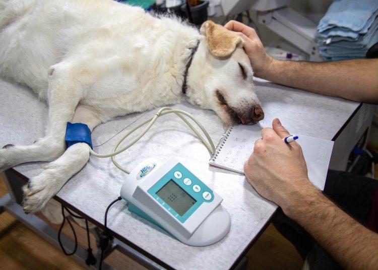 Cancer du poumon chez le chien