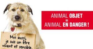 Pétition pour un nouveau statut juridique de l'animal