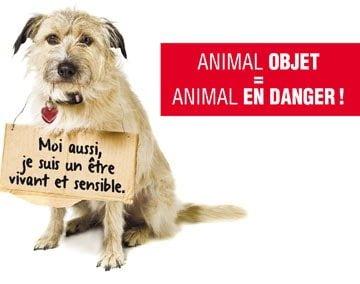 P tition pour un nouveau statut juridique de l 39 animal - Difference entre meuble et non meuble ...