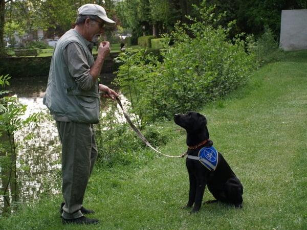 Famille d'accueil pour chien guide d'aveugle : pourquoi