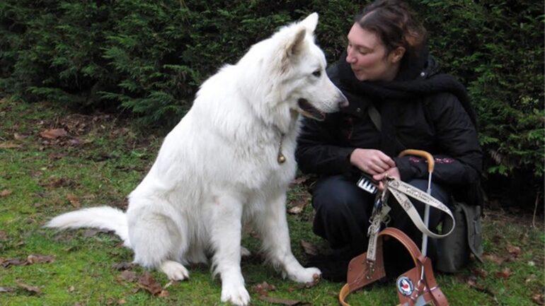 Famille d'accueil pour chien guide d'aveugle pourquoi pas vous
