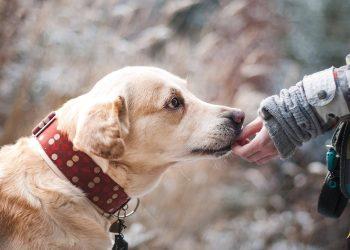 Ordres chien indispensables