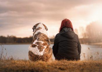 Relation chien homme