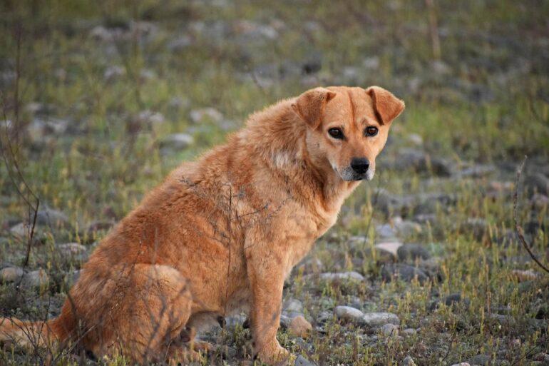 Sauvetage chien autoroute Eldad Hagar