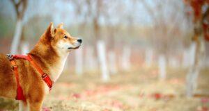 Les bénéfices du chien pour l'Homme