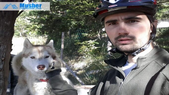 Canivtt vélo chien