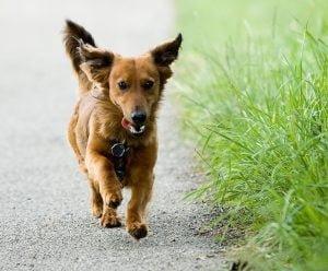 durée promenade chien