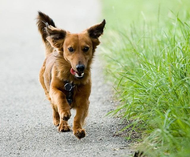 promener son chien de l 39 utilit au plaisir guide du chien. Black Bedroom Furniture Sets. Home Design Ideas