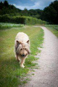 promener son chien les activites