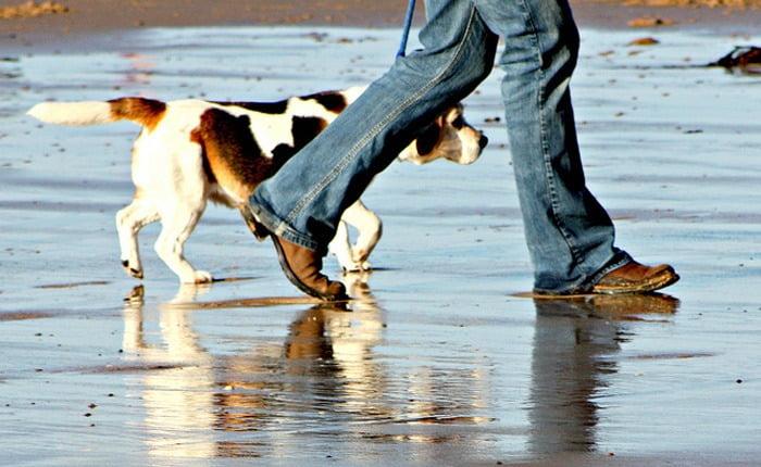 Promener son chien, de l'utilité au plaisir ! - Guide du Chien