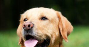 Etude émotions chien