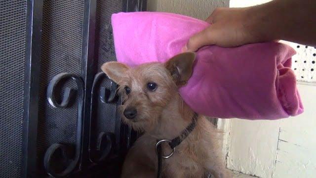 Eldad Hagar se sert d'une couverture pour caresser la chienne sans se faire mordre