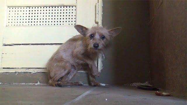 Abandonnée et terrifiée, une chienne se metamorphose après son sauvetage