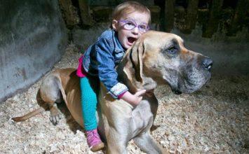 Un chien veille sur un enfant épileptique en prévenant ses crises 20 minutes avant