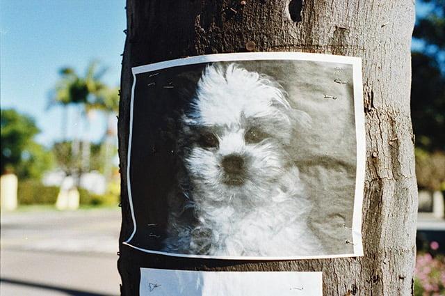Avis de recherche chien