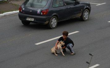 Un garçon de 11 ans risque sa vie pour sauver son chien heurté par une voiture