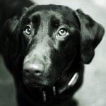 assurance pour chien pas cher