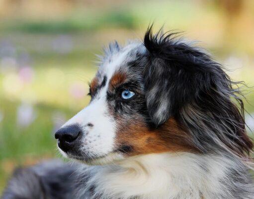 Citations sur les chiens