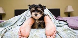 10 signes préférence chien aux humains