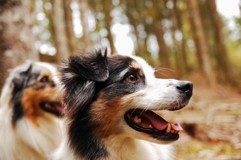 Leçons de vie chien