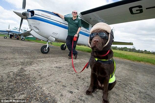 Callie totalise 250 heures de vol et 80450 km