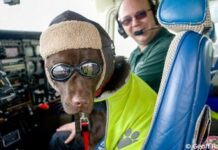 Chienne licence pilote avion