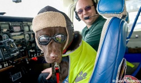 Chienne licence pilote avion