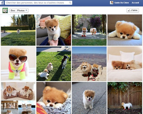 Photos profil chien facebook
