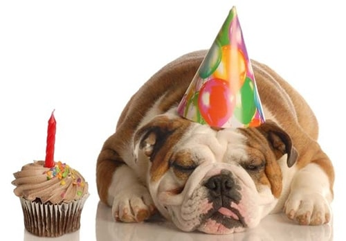 anniversaire-chien-2