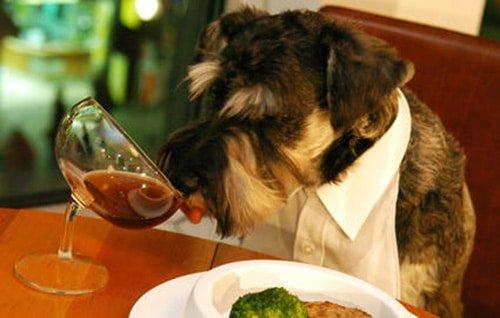 partager-diner-avec-chien-2
