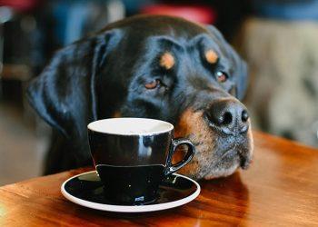 Aliments mortels pour le chien