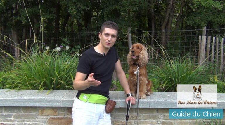 Comment apprendre le touche à son chien sans clicker et en 5 min