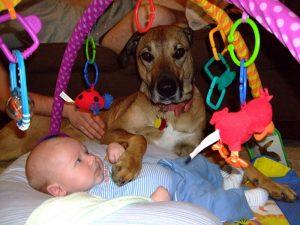 Comment appréhender le jour de la rencontre bébé et chien