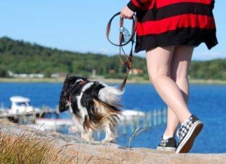 Promeneur de chiens activité rémunérée sur mesure pour les amoureux des chiens