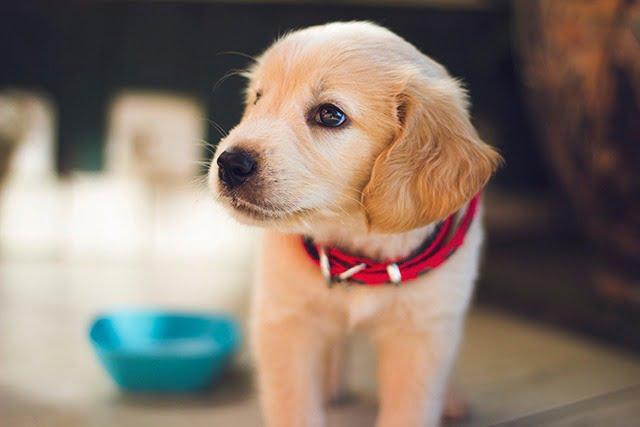 Accueillir un chien pour la vie