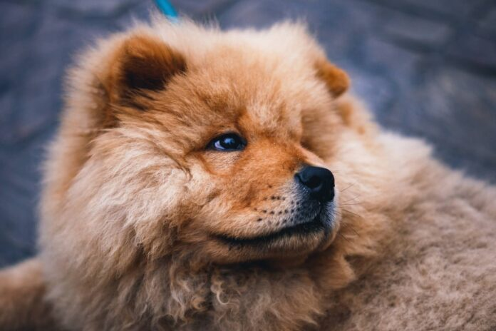 Adopter un chien un acte responsable avant tout