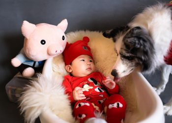 Arrivée d'un bébé et chien : conseils pour une rencontre réussie