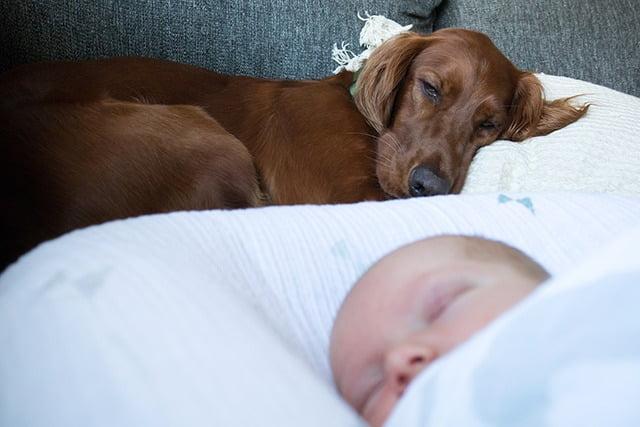 Bébé et chien prudence avant tout