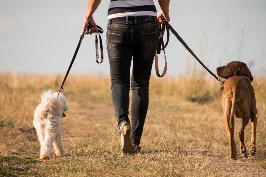 Promeneur de chiens une activité rémunérée pour les amoureux des chiens