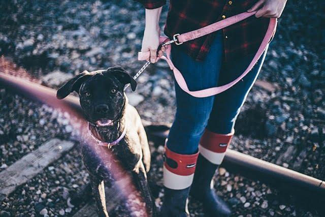 Promeneur de chiens les avantages
