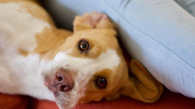 8 raisons d'adopter un chien dans un refuge